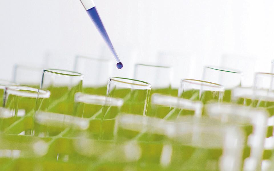 Estudo em Biotecnologia